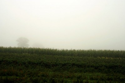 fog on the apple farm